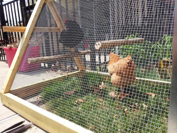 chicken tractor outdoor roosts